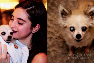 17 Photos of celebrities' pets guaranteed to make your day better!